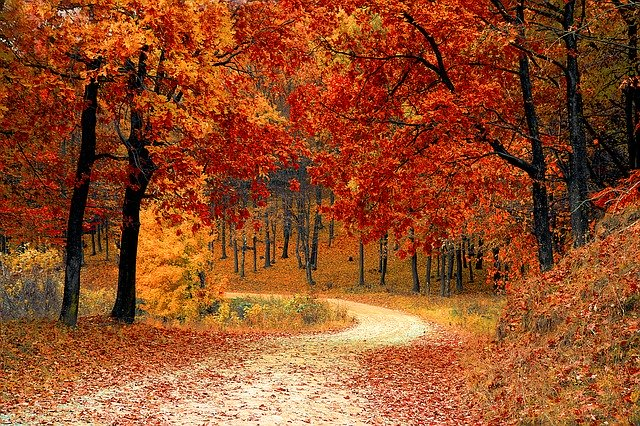 jesieni-podbicie-zaplecz-statlink-922.jpg